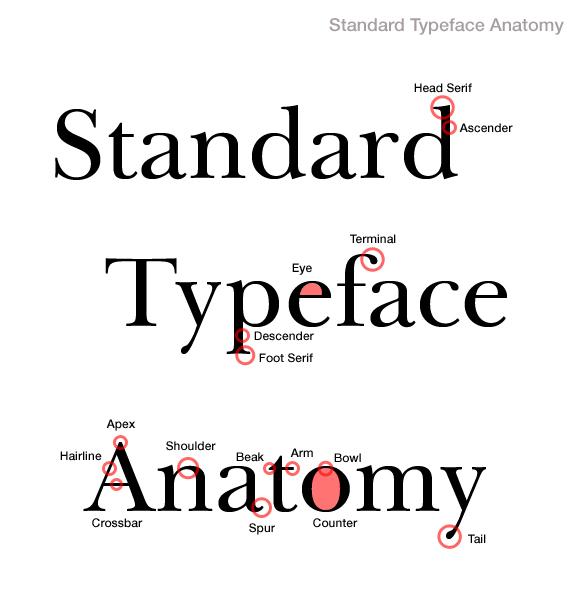 standard-typeface-anatomy